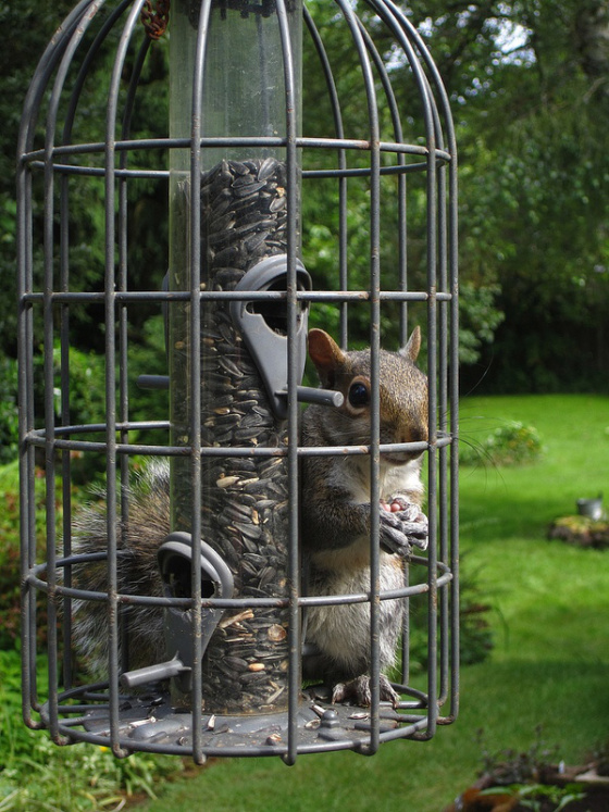 bird image larger feeder to how out squirrels wildlife view keeping feeders of keep ace