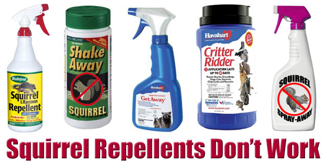 squirrel repellents dont work