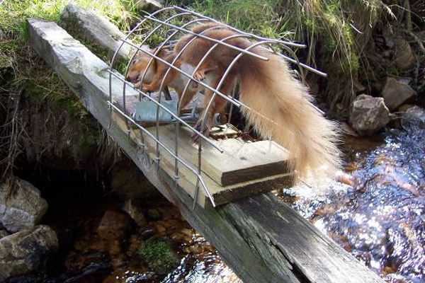Squirrel Traps – Five Issues You Really Should Know