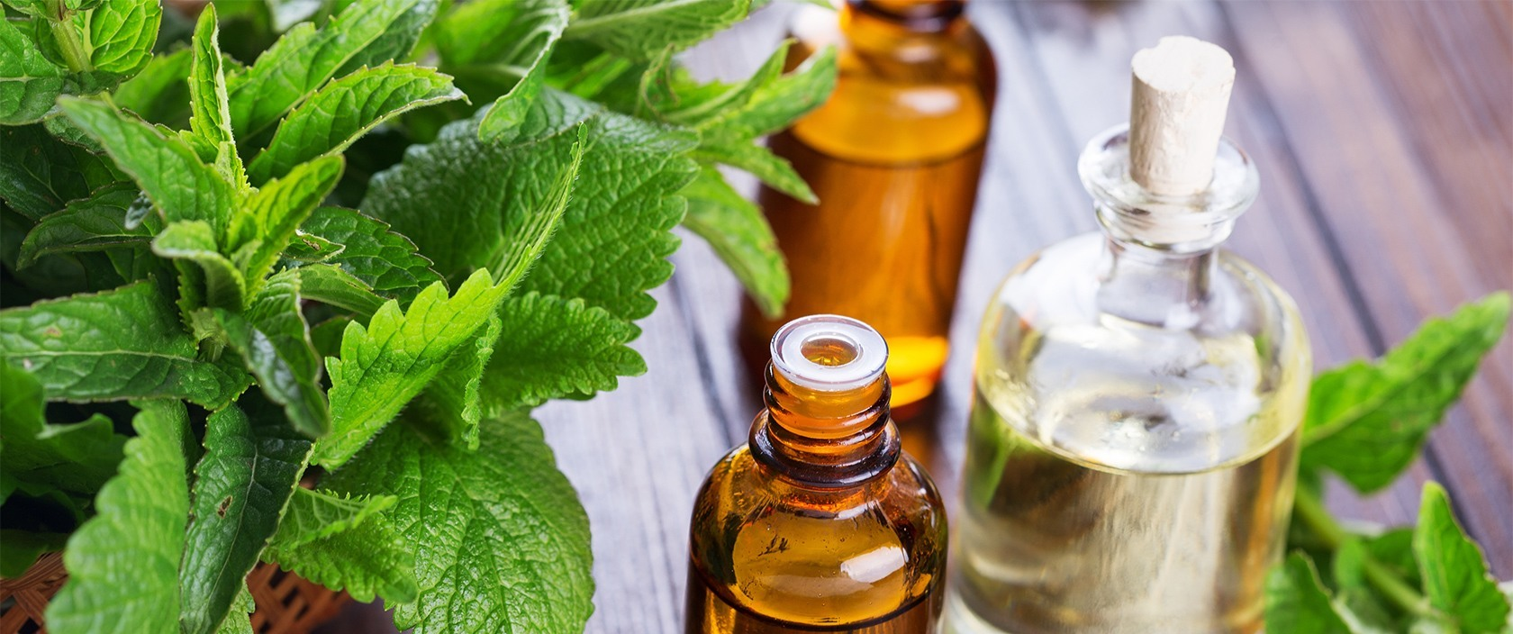 Peppermint Oil as a Natural Mouse Repellent