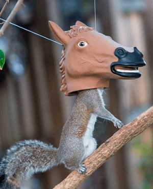 Accoutrements Horse Head Squirrel Feeder review
