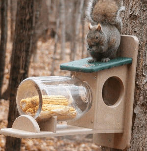 Birds Choice Squirrel Jar Feeder review