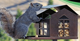 Durable Bird Proof Squirrel Feeder review